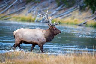 Elk xing
