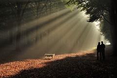 Watching the magic sunbeams together. (peeteninge) Tags: sunbeams sunshine forest dog people zonneharp zonnestralen bos nature natuur hond mensen sonyrx10 sony