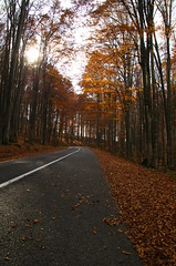 Mighty trees, endless road (Baubec Izzet) Tags: baubecizzet pentax nature autumn trees road forest light