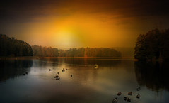 Birds. (augustynbatko) Tags: birds lake autumn water nature sun sky clouds trees landscape mist sunset tree duck swan