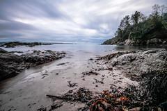 Morning in the bay (NikNak Allen) Tags: cornwall cawsands cawsandsbay seaweed beach sand rocks stones sea water coast ocean horizon sky clouds movement trees seascape longexposure light early