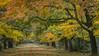 Departure for autumn (Jean-Luc Peluchon) Tags: fz1000 lumix couleur automne arbre atmosphère allée calme voyage balade rêve féerique imaginaire branche feuille