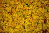 Autumn Leaves_0317 (smack53) Tags: smack53 leaves autumn autumnseason autumncolors fall fallcolors fallseason nikon d100