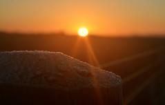 Happy frosty fence Friday ☺️...x (shona.2) Tags: happyfencefriday scotland eastlothian frosty sunset friday fence hff