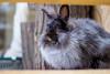modelo peluda. (matíasganaperagallo) Tags: conejo mascota