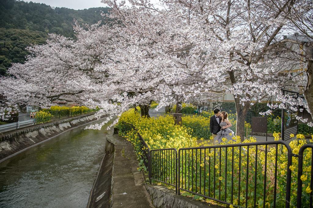 京都婚紗 山科疏水櫻花婚紗拍攝