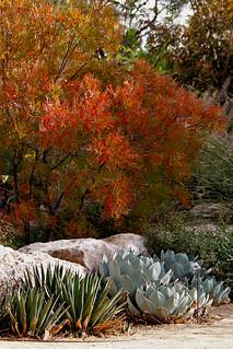 Springs Preserve Fall Garden Path