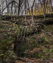 reaching roots (x-raymond) Tags: tree rock ledge leave sky