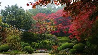 Rainy Garden / Kyoto Shisendo 京都  詩仙堂