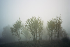 (michel nguie) Tags: fog rondpoint bondues film analog trees michel nguie