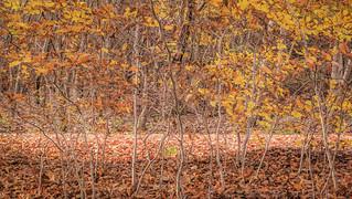 321/365 Autumn Understory