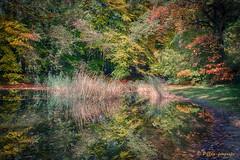 reflection (www.petje-fotografie.nl) Tags: arnhem bomen gelderland ptjefotografie velp bos herfst kleuren
