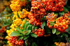 Colors (kalbasz) Tags: colors nature autumn outdoor