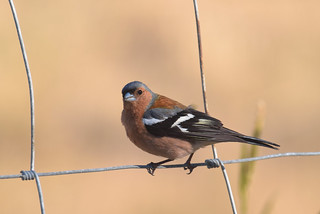 Aviation Security's Chaffinch ?!