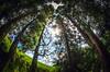lagoa de Sao Bras 4a (Bilderschreiber) Tags: lagoa de sao bras saobras saomiguel miguel azore azoren portugal wood wald trees bäume sky himmel europa