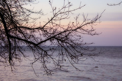 Twilight: Luminar2018 (KWPashuk) Tags: nikon d7200 tamron18400mm lightroom luminar shoreline sunset evening lake branches winter bronte beach park oakville ontario canada outdoors nature