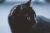 black. (Nicole Favero) Tags: verde black cat kitty love animals cute cool awesome forever followme mine nikon nikond5000 camera reflex cuteness yellow eyes portrait nature darkness crazycatcafè milan place lightroom