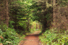 Forest Road C2816 (All h2o) Tags: forest road trees tree nature path trail plants woods pacific northwest color light leaves november landscape