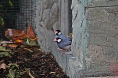 IMG_0855 (jaybluejeans94) Tags: animal animals nature chester zoo chesterzoo bird birds