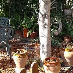 ¿ Qué ves ? (Carola Domenech) Tags: ojodegato naturaleza olvido terraza lamura photography magicnature