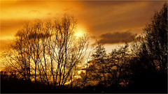 Sunset behind trees (Foto Martien) Tags: sunset sundown dusk zonsondergang schemer schemering ocaso puestadelsol atardecer sonnenuntergang dämmerung zwielicht coucherdusoleil tramonto pôrdosol západslunce zachódsłońca закат 日落 ηλιοβασίλεμα günbatımı सूर्यास्त matahariterbenam 夕日 일몰 غروب ਸੂਰਜਡੁੱਬਣ พระอาทิตย์ตกดิน lúcmặttrờilặn silhouettestrees silhouettenbomen even evening afternoon avond namiddag november colors colorful red yellow purple light licht arnhem arnhemzuid gelderland betuwe park immerloopark netherlands nederland holland dutch sony a77 sonyalpha77 sonyilca77m2 70300 tamron70300mmf456sp martienuiterweerd fotomartien
