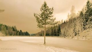 My frozen heaven, for 7dwf