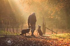 Rayon de soleil (Anaïs Franch Photographie) Tags: anaïsfranchphotographie chiens dogs cani lumière light luce automne autumn autumno