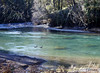 Little No. Santiam River (Joan Gray) Tags: littlenorthsantiamriver northsantiamcanyon northfork geese