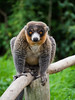 You Looking at me? (RS400) Tags: zoo animals animal close up wow cool wicked macro blur out background travel bristol southwest uk 2017 fence olympus love nature