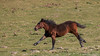 Tous derrière tous derrière... (Nicolas Rouffiac) Tags: animal animals animaux free freedom nature horse cheval poulain chevaux horses foal libre liberté course galop sprint gallop