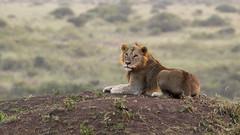 Nairobi-Nationalpark-7560 (ovg2012) Tags: kenia kenya nairobi nairobinationalpark