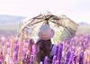 Lake Tekapo lupin field, umbrella play (Le Fabuleux Destin d'Amélie) Tags: lake tekapo lupin field lupins flowers spring summer newzealand girl child sunumbrella umbrella play
