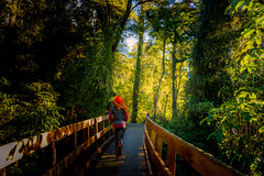 Running free in a dream (amcatena) Tags: landscape forest jungle nature tree bridge green running run rainforest newzealand