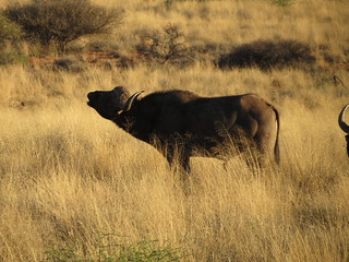 South Africa Hunting Safari - Northern Cape 19