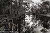 Downstream on Fisheating Creek (BobHartmannPhotography) Tags: hartmann landscape swr l fisheatingcreek bobhartmanncom fall 365 bobhartmannphotography 1365 everglades bobhartmann wwwbobhartmanncom c2017bobhartmann faceofmothernature fl usa