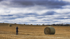 one of these things is not like the other (rockinmonique) Tags: 52in52 charlotte feild harvest hay haystack golden sky clouds blue alberta