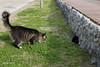 What a moment! -¡Qué momento! (suzy scotti) Tags: gatos peligro miradas enfrentamiento mascotas