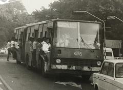 Omnibus Giron XVI (Ikarus) #4065  Ruta 174 Lawton - Vedado (Adrian (Guaguas de Cuba)) Tags: