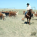Livestock29 tif