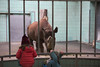 Prisoner or entertainment? (Notquiteahuman1) Tags: zoo bars bathroom prison conservation entertainment animals mammal rhino zoologicalgarden frankfurt blue grey brown red germany africa 2017 indoor mammalian rinoceronte captive jardimzoológico