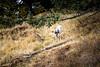 GHOST DEER (PHOTOGRAPHY|bydamanti) Tags: washington unitedstates us deer white orcasisland sanjuanislands mountconstitution moranstatepark