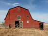 The red barn (annkelliott) Tags: alberta canada seofcalgary building structure architecture barn wooden weathered old decay ruraldecay ruralscene brightred backofbarn fence field grass landscape scenery bluesky photographedwithpermission outdoor fall autumn 30october2017 fz200 fz2004 panasonic lumix annkelliott anneelliott ©anneelliott2017 ©allrightsreserved