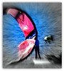 xtreme keys (GR167) Tags: kitesurfing