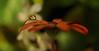 nov24 2017 6a (Delena Jane) Tags: delenajane dfo daisy reflections waterdroplet waterbead macro newfoundland ngc canada closeup pentaxart shamrock