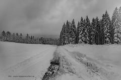 20171129001179 (koppomcolors) Tags: koppomcolors winter vinter snö snow forest skog värmland varmland sweden sverige scandinavia