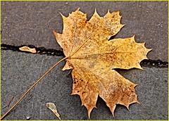 171202 Pomona Mills Park (11) (Aben on the Move) Tags: pomonamillspark toronto thornhill ontario canada park nature