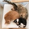 All Photos-2992 (lazybonessss) Tags: kitten2 momo iphone8 cat kitten maruko nana kitten3