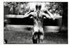busandmorryver01AARFURA033expo (JGF015) Tags: metro atletico visio geist 5inchtwitch bougé apollo appointment travelagent slur hegemony slough scratch lavillegallante itch which snich switch rich hitch визит unfou halter longsleeve ambitionsynoptic regardsavage wait гвоздьпрограммы alegro lesbulles sensorealanticipation