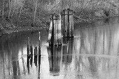 pilings (David Sebben) Tags: pilings hennepin canal rockisland illinois chicago concrete shortcut historic