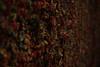 assorted flavors (pacfolly) Tags: seattle gumwall gumwallseattle gum dark closeup chewinggum